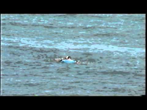 Close Call Shark Attack Waikiki March 2004