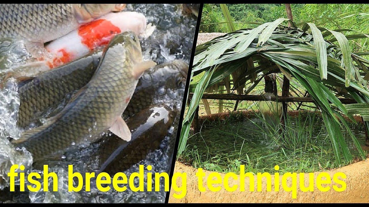 Primitive Skills: Fresh water fish breeding techniques - Part1