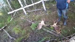 Охота 240 заключительные дни охоты на северо западе России