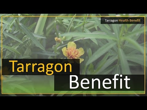 Tarragon leaves health benefits
