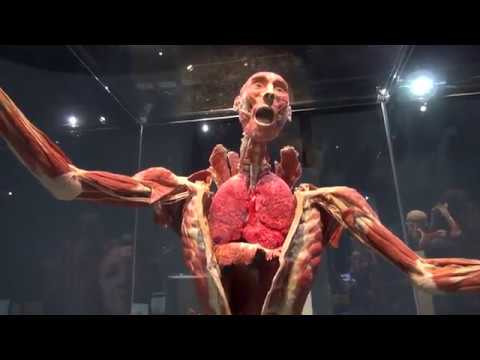Present Body Worlds Decoded At The Tech Museum Of Innovation