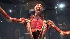 Present! - Body Worlds Decoded at the Tech Museum of Innovation