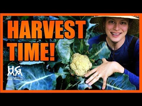 When to Harvest Fresh Vegetables