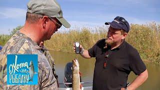 Жерех. ''Охота на рыбалку'' с Вилле Хаапасало   Моя Планета
