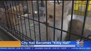 Cat Lovers Meet At Long Beach 'Kitty Hall'