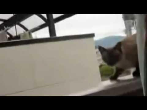 Super Cat (Fail)