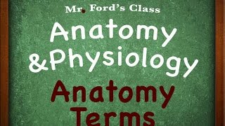 Introduction To Anatomy Physiology : Anatomy Terms