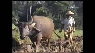 Video Upacara Adat Seren Taun di Cigugur Kuningan Jawa Barat