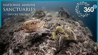 Explore the Blue: 360° Hawaiian Adventure
