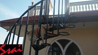 Cutest Video- Pug Climbing The Round Ladder