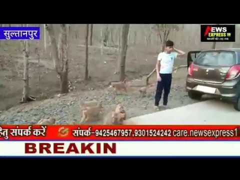 सुल्तानपुर सामाजिक कार्यकर्ता वेजुबान जानवरों को खिला रहे खाना