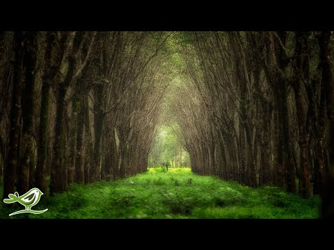 Relaxing Celtic Music: Harp Music, Peaceful Music, Soothing Music, Calming Music ★85