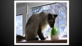 Приятного аппетита!!! Кот Дымок потребляет витамины.