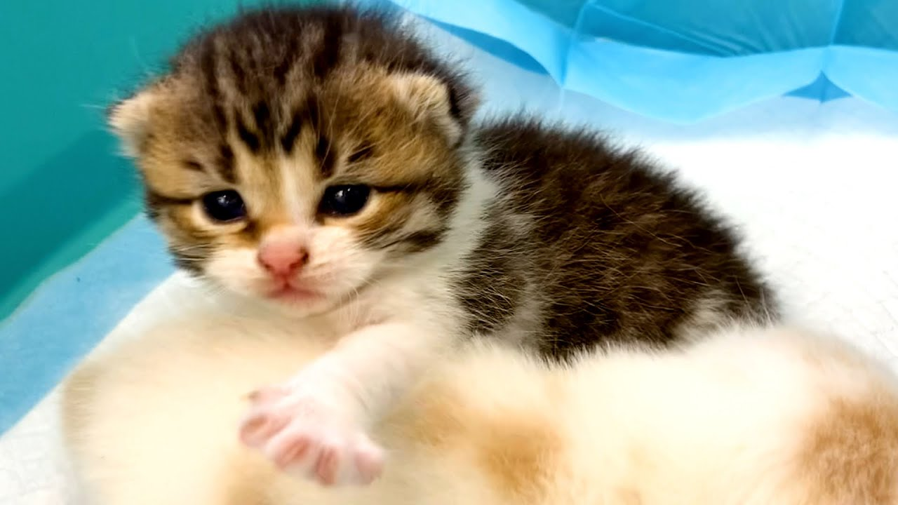 Cutest kittens in the world Bibi and Coco crawl and squeak to call their mom cat