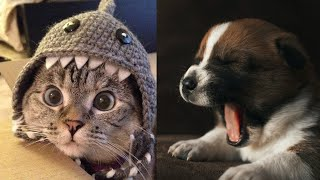 Try Not to Laugh With These Funny Animals #Compilation 1