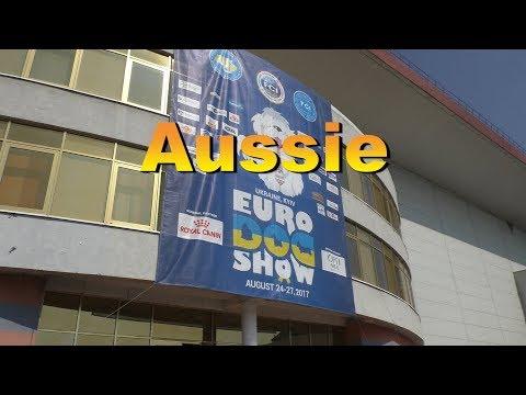 EURO DOG SHOW 2017. Aussie part 3