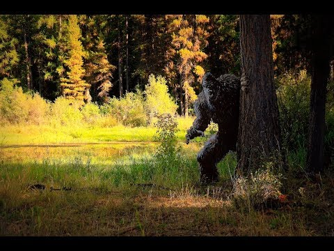 World Bigfoot Radio #57-1 ~ Northwest Montana Bigfoot/Grizz & Mama Bear