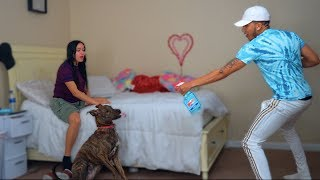 Feeding Our Dog Windex Prank On Girlfriend 😂
