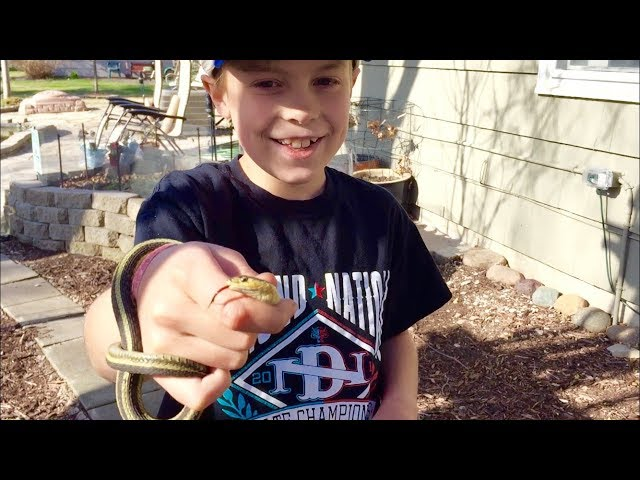 Herping Minnesota ~ Catching Garter Snakes