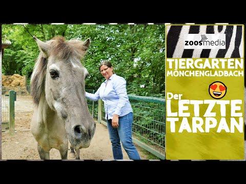 Tiergarten Mönchengladbach: Der letzte TARPAN in Odenkirchen | zoos.media