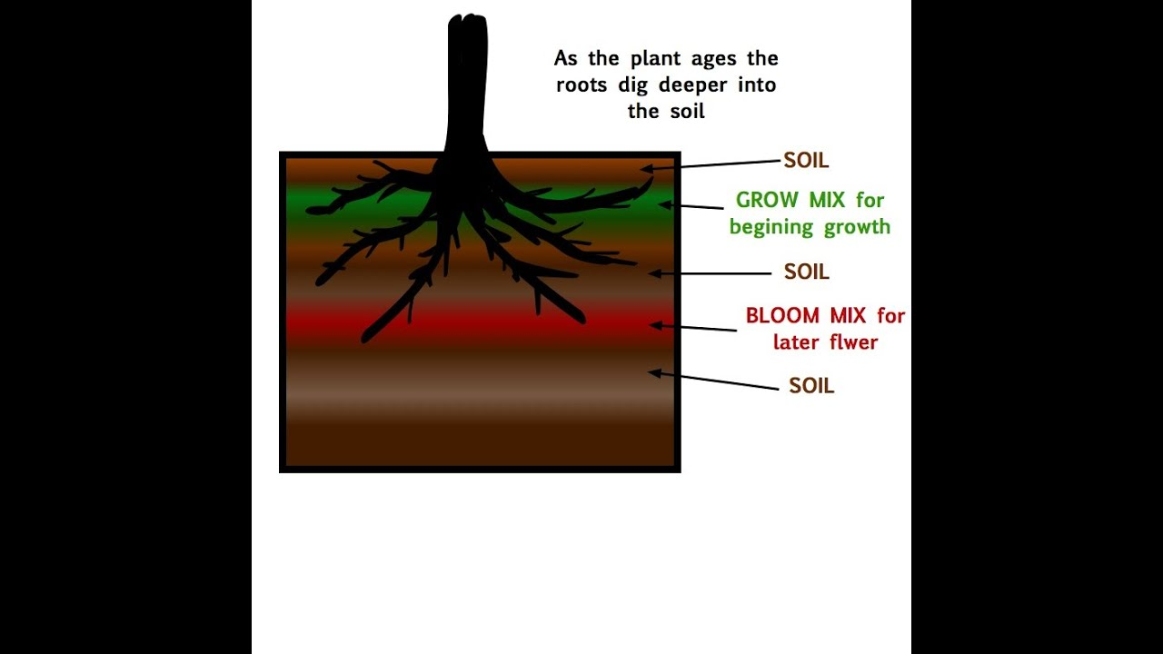 How to layer your soil and amendments ( Super soil the easy way )/transplanting Big plants
