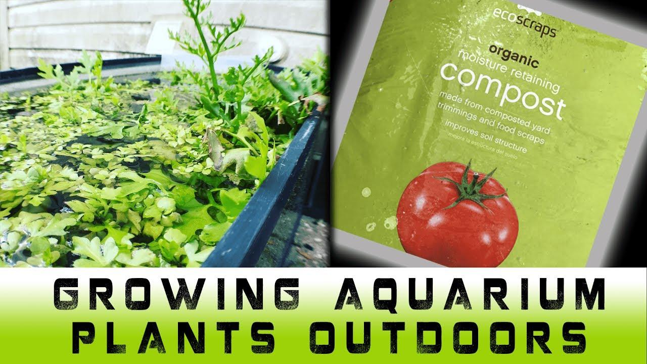 how to grow aquarium plants