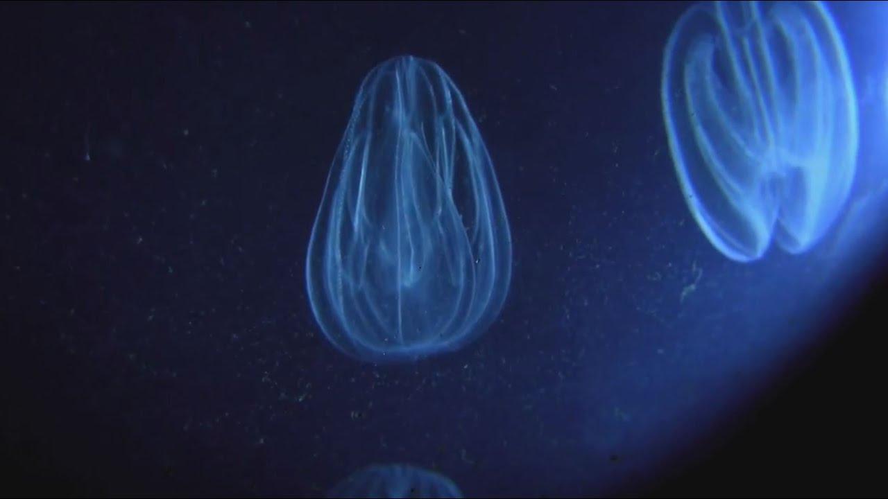 Bioluminescent Stand Up Paddleboarding in Merritt Island, FL