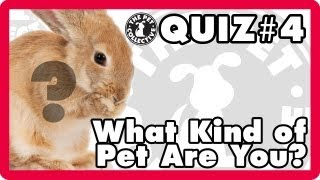 What kind of pet are you?- Quiz