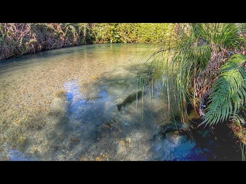 Catching Huge Trout In ULTRA Clear Water!