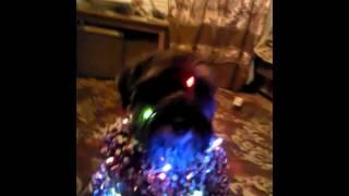 Собака елка