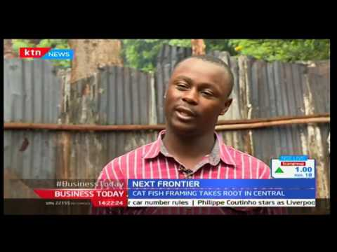 Cat fish farming gives a chance at employment to residents ofCentral Kenya