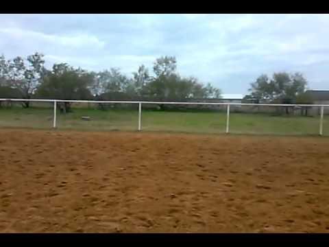 Bryan tx carreras de caballo tunes