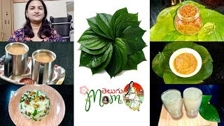 Health Benefits || Betel leaf Recipes || Betel leaf Tea || Betel leaf Rice
