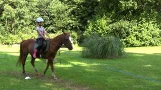 Colonie de vacances L'écurie fantastique - équitation et activités de la ferme