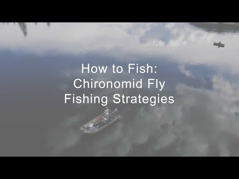 How To Fish: Chironomid Fly Fishing Strategies | GoFishBC