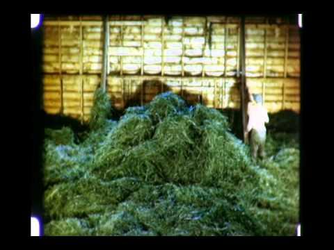 Green Hay - 1947