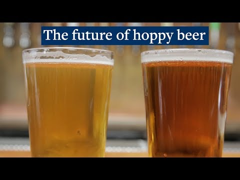 Brewing hoppy beer without the hops | Berkeley News