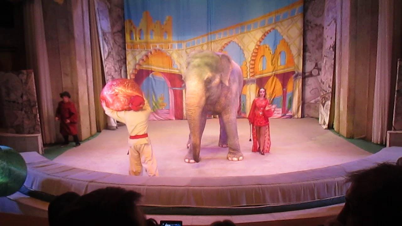Слон в уголке Дурова - YouTube