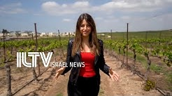 Israel's biggest winery in action - Barkan Winery