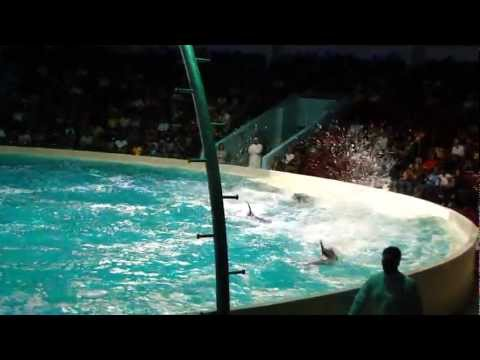 Dubai Dolphin Show in Creek Park with DUA & TAHA part 1