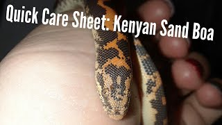 Quick Care Sheet: Kenyan Sand Boa
