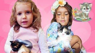 Любимый Котёнок Мисс Кэти теперь живёт у нас