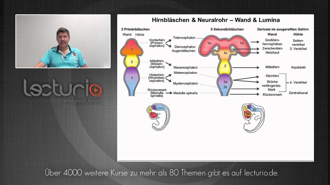 Zentrales Nervensystem - Hammerexamen   Dr. med. Steffen-Boris Wirth ...