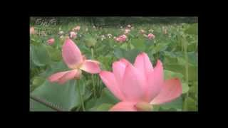 シャンタンさんのユルユル瞑想 5