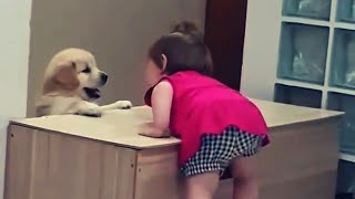 Baby and dog funny moments