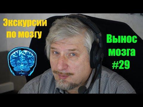 Экскурсии по мозгу. Сергей Савельев (Вынос мозга #29)