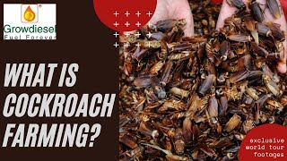 Cities Across The Country Are Building Cockroach Farms