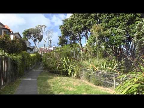 Evening Walk - Murrays Bay to Browns Bay, Auckland NZ