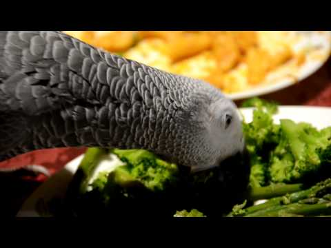Yuki the African Grey Parrot, Eats Her Vegetables