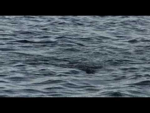 Mosquito Lagoon Redfish Youtube